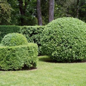 Саженцы кустарников
